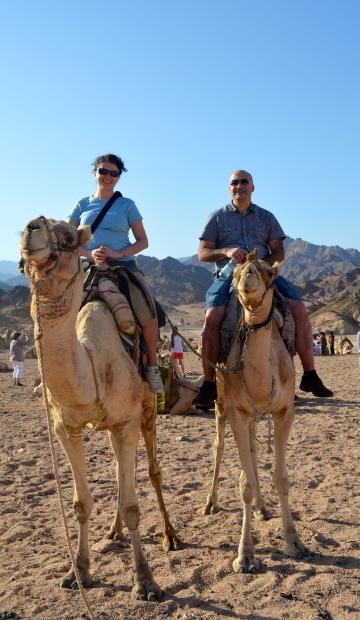rosaroseblogg kamel